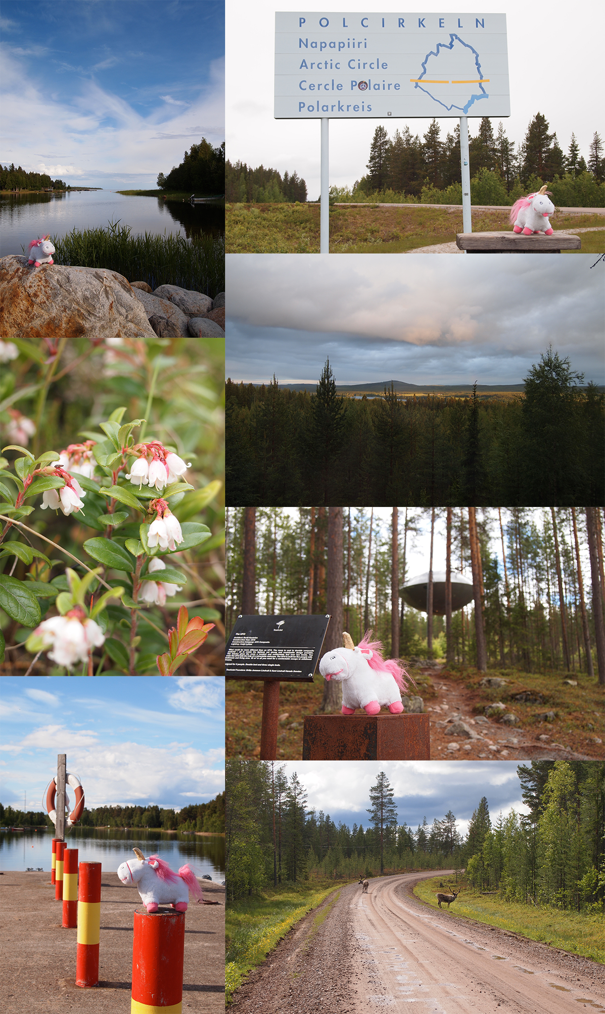 In Lapland Uni saw reindeer, lingonberry flowers, the polar circle, lots of forest ... and an UFO!