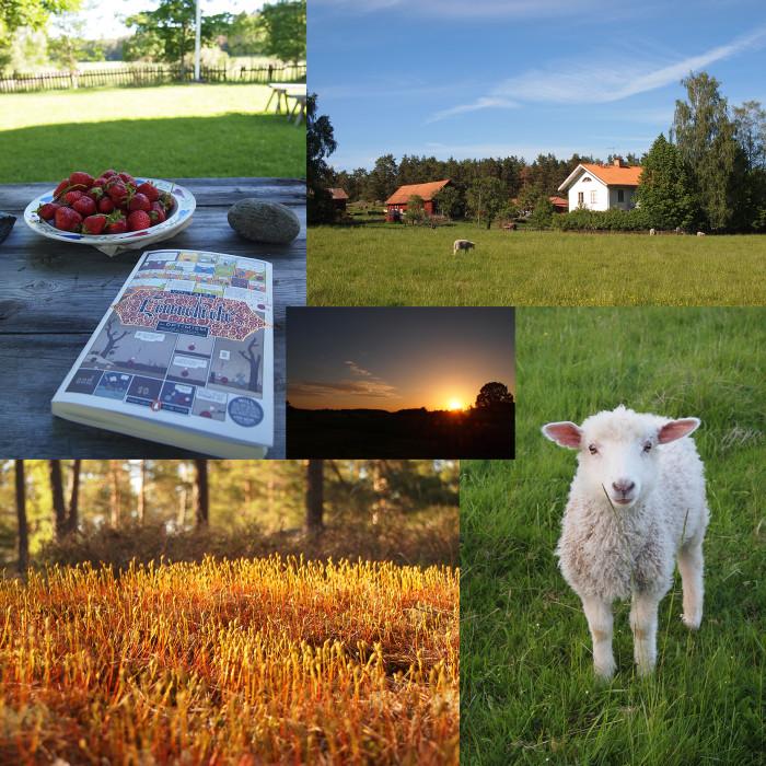 Pigge, Erdbeeren, Voltaire, Sonnenuntergang um 21:30 - Sommer in Schweden at its best!