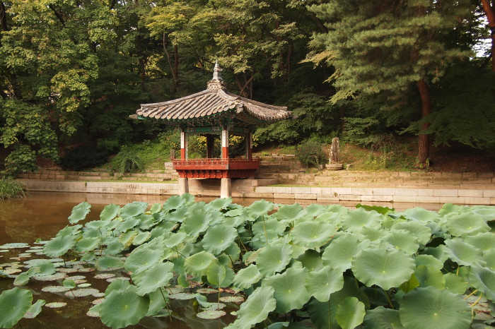The lotus pond in Huwon secret garden of Changdeokgung palace in Seoul. Flowers in July. Maybe next time ;-)