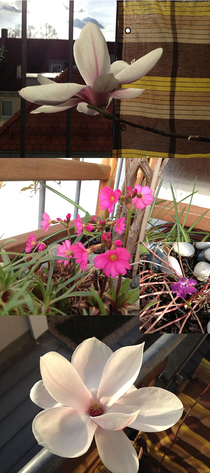 Im Frühling blüht es sich am besten sulle balcone.