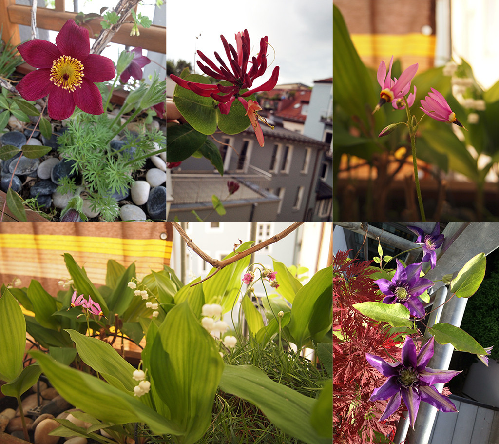 Blütenpracht im Mai