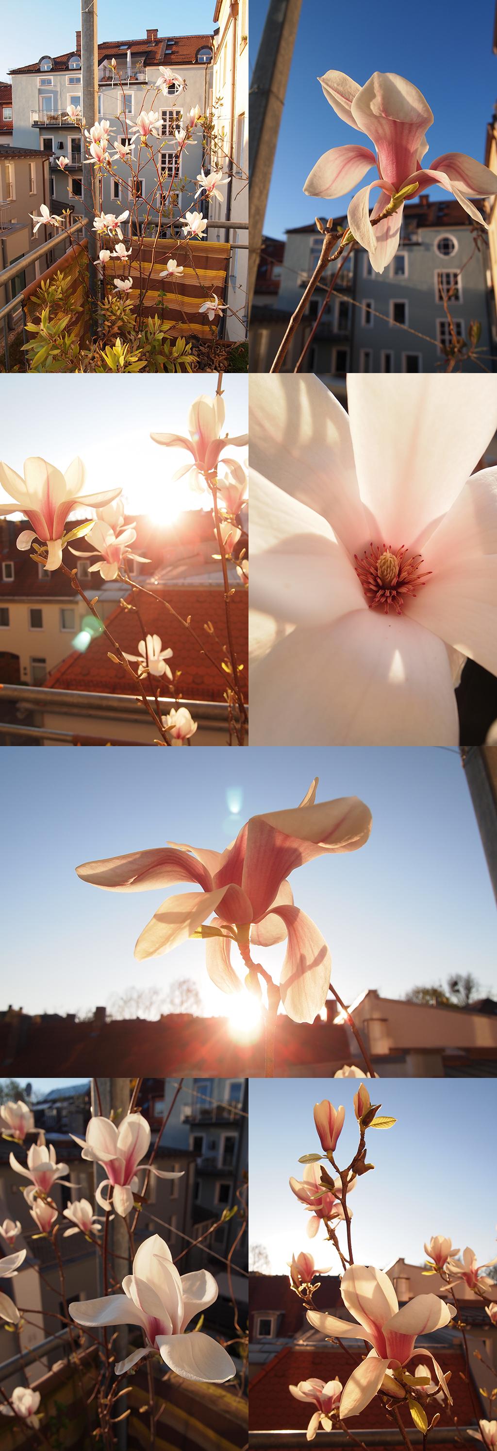 Unbeschreibliche Blütenpracht!